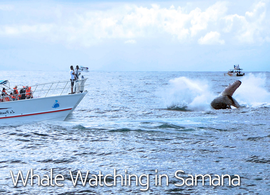 homewannab0a15public_htmlwp-contentuploads201802humpback-whale-watching-tours-excursions-from-samana-port-dominican-republic-900px.jpg
