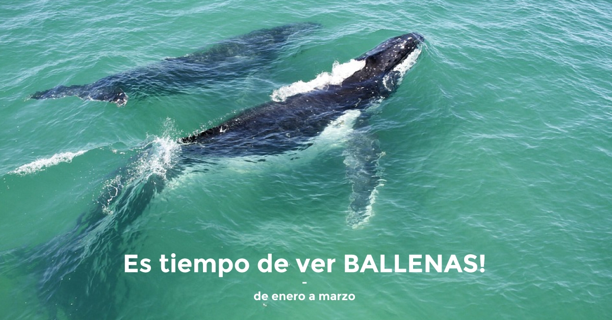 temporada-avistamiento-ballenas-samana-rio-san-juan-2018-web