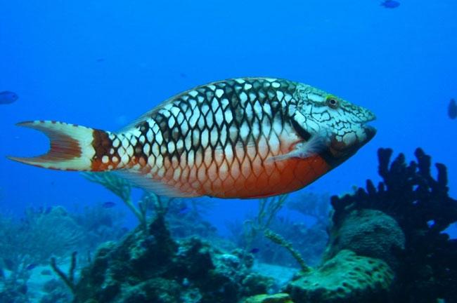 caribbean-snorkeling-fish-1