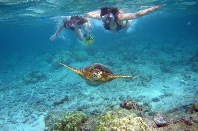 caribbean-snorkeling-turtle