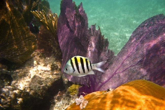 fish-coral-garden