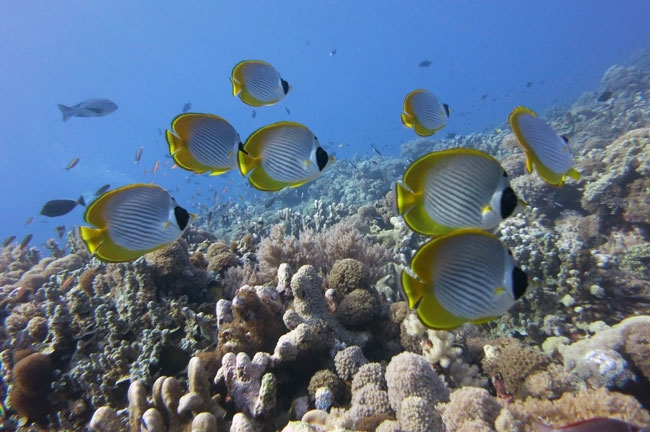 tropical-fishes-2