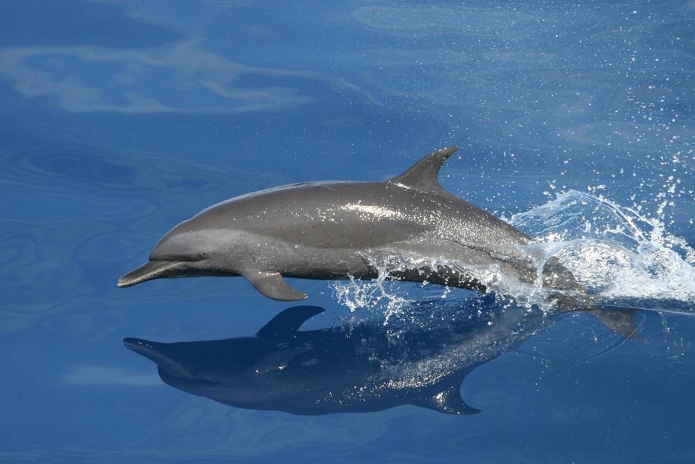reflejo-delfin-en-libertad