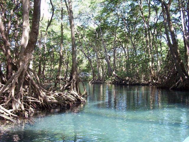 Eco Excursion Dominican Republic
