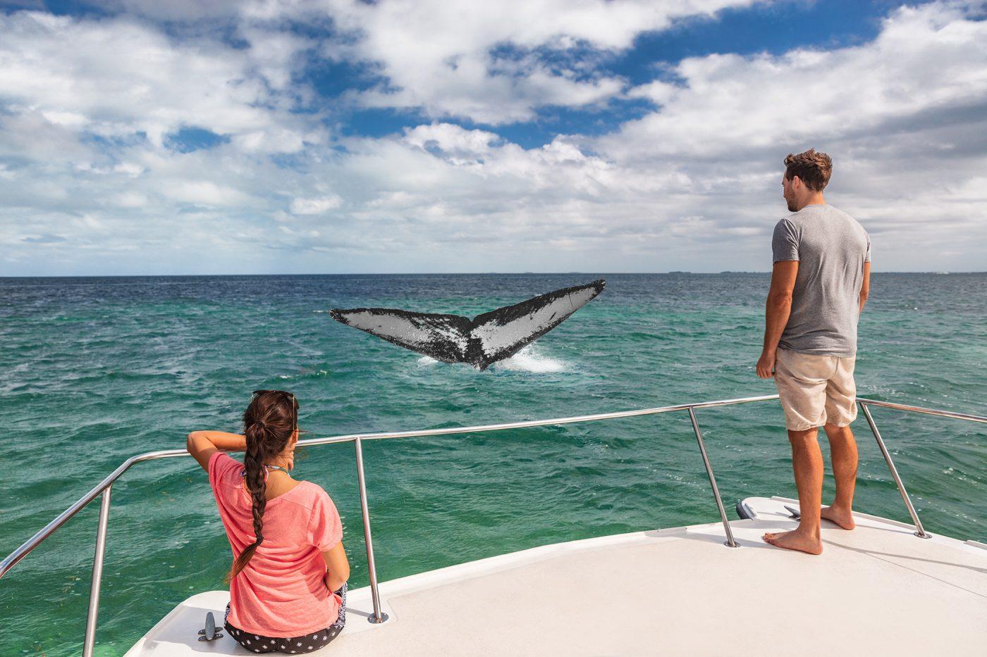 1-avistamiento-ballenas-whale-whatching-samana-barco-excursion-tour-boat-dominican-republic-republica-dominicana