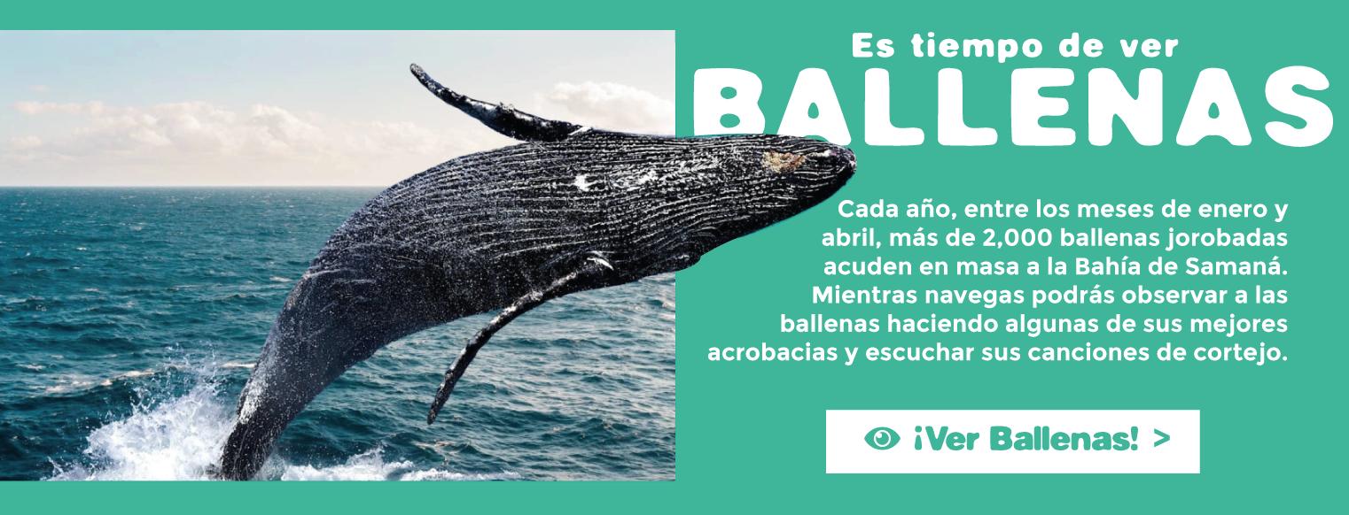 tiempo-de-ver-ballenas