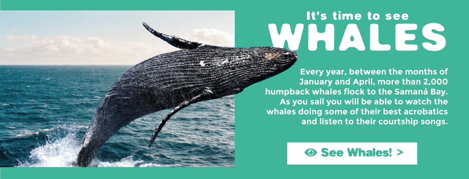 time-to-see-whales