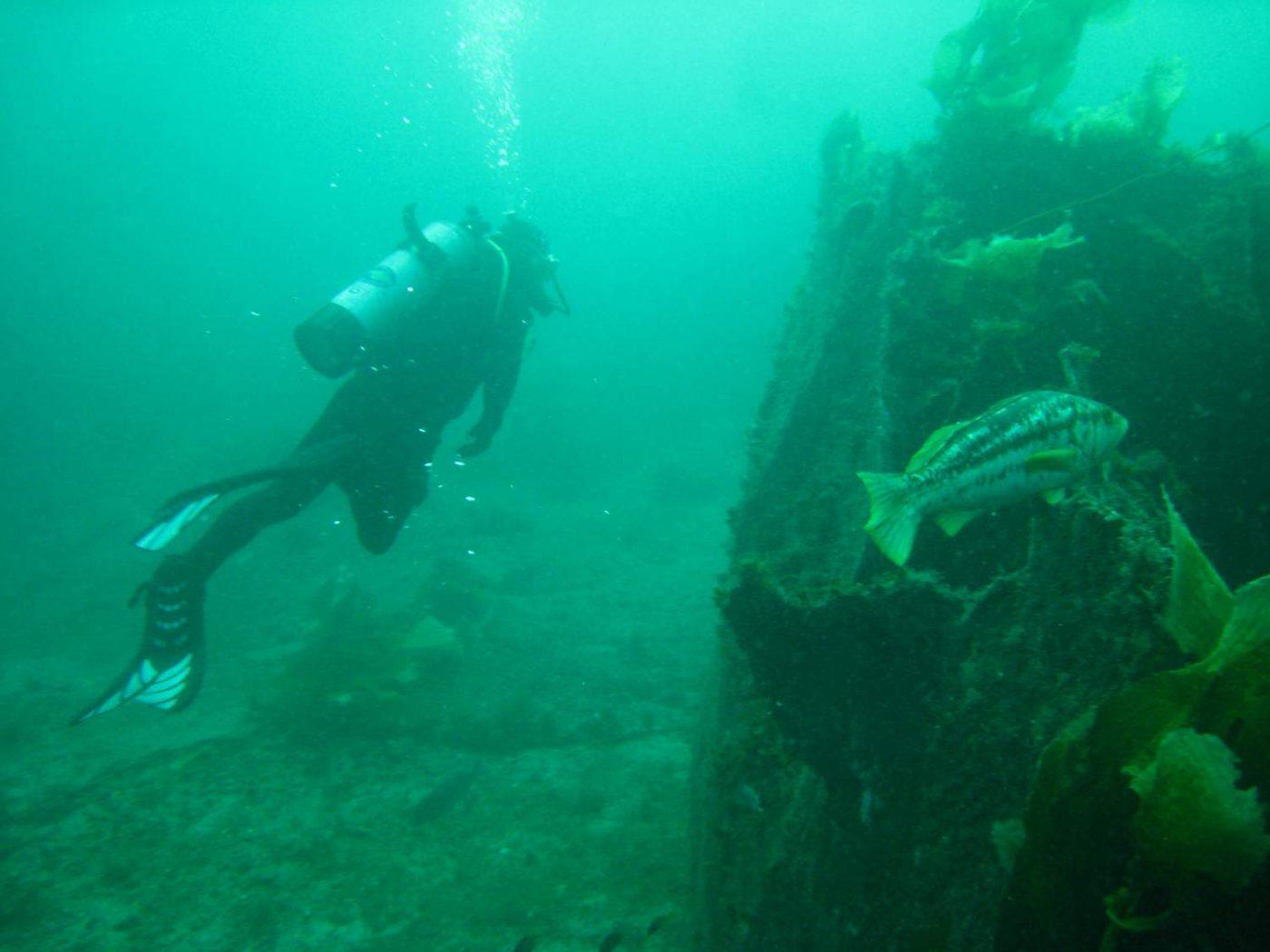 diving-catalina-dominican-republic